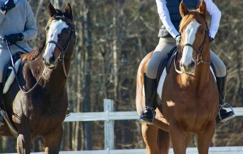 two horses under saddle