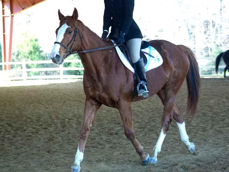horse under saddle